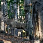 Ustroń - Leśny Park Niespodzianek
